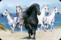 Animal email stationery. Black Horse Leading The Way
