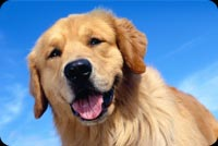 Smiling Dog And Blue Skies Stationery, Backgrounds