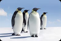 Four Penguins Looking Right Stationery, Backgrounds