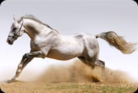 Mighty White Horse Trotting Stationery, Backgrounds