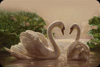 2 Graceful Swans Swimming Stationery, Backgrounds