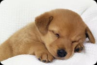 Fluffy Puppy  Peacefully Sleeping Stationery, Backgrounds