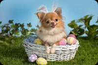 Cute Dog In Easter Basket Stationery, Backgrounds