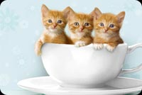 Animal email stationery. 3 Kittens In A Bowl