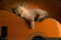 Kitten Sleeping On Guitar Stationery, Backgrounds