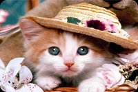 So Cute Kitty Cat With The Hat Stationery, Backgrounds