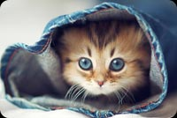 Cute Cat Face In Jeans Stationery, Backgrounds