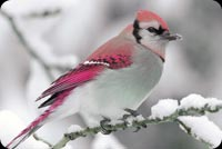 Animal email stationery. Winter Bird Snow Branch