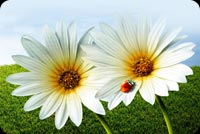 2 White Flowers At Bloom Stationery, Backgrounds