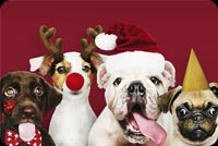 Christmas Puppies Stationery, Backgrounds