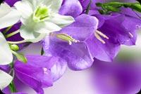 Joys Of Easter Stationery, Backgrounds