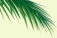 Palm Stationery, Backgrounds