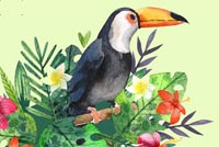 Toucan Stationery Stationery, Backgrounds