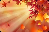 Fall autumn email stationery. Automn Leaves And The Sun