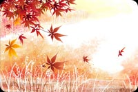 Fall autumn email stationery. Sunlight Fills The Autumn Setting