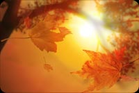 Fall autumn email stationery. A Glimpse Of The Sun And Leaf