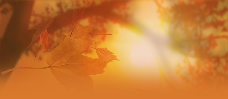 fall autumn email stationery stationary a glimpse of the sun and leaf