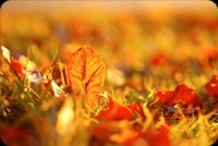 The Gradd During Autumn  Stationery, Backgrounds