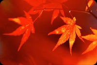 A Touch Of Red On Leaves Stationery, Backgrounds