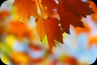Fall Leaves Stationery, Backgrounds