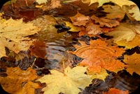 Fall autumn email stationery. Leaves On Water