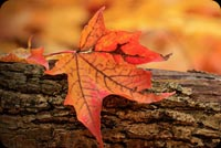 Fall autumn email stationery. Red Leaves On The Log