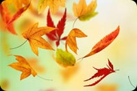 Fall autumn email stationery. Beautiful Leaves Falling Autumn