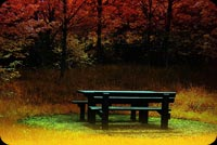 A Bench At A Park Stationery, Backgrounds