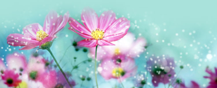 flowers email stationery  stationary   lovely pink flowers in blue background