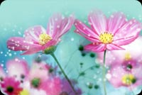 Lovely Pink Flowers In Blue Background Stationery, Backgrounds