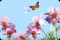 Flowers With Butterfly Above Stationery, Backgrounds