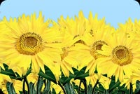 Vibrant Yellow Sunflowers Stationery, Backgrounds