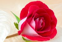 Beautiful Rose For Someone Stationery, Backgrounds