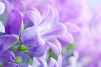 Pretty Purple Stationery Stationery, Backgrounds