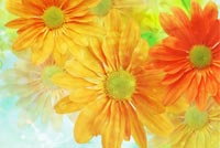 Yellow And Orange Flowers Stationery, Backgrounds
