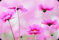 Precious Flowers Stationery, Backgrounds