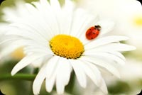 Lady Bug On Flower Stationery, Backgrounds