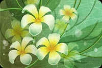Flowers email stationery. Art Green & Yellow Flowers