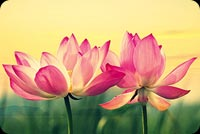 Beautiful Lotus Flowers  Stationery, Backgrounds