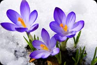 Purple Flower, Snow Ice Stationery, Backgrounds