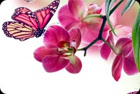 Beautiful Spring Flower & Butterfly Stationery, Backgrounds