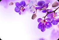 Purple Orchid Flowers Reflection Water Stationery, Backgrounds
