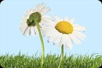 2 Flowers And Green Grass Stationery, Backgrounds