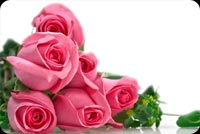 Lovely 6 Pink Roses Stationery, Backgrounds