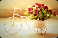 Bouquet Of Red Roses In A Bike Stationery, Backgrounds