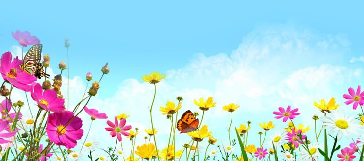 nature email stationery  stationary   colorful flowers and blue skies