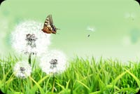 Nature email stationery. Butterflies Attracted To Flowers