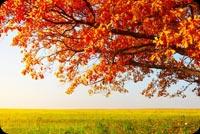 Orange Leaves Amazing Nature Stationery, Backgrounds
