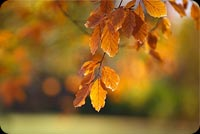 Yellow Autumn Leaves Stationery, Backgrounds