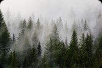 Green Pine Trees Covered By Fogs Stationery, Backgrounds